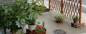 玄関の鉢植